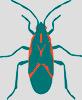 boxelder-bug